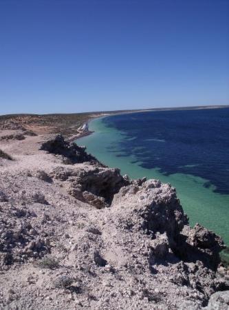 เดนแฮม, ออสเตรเลีย: this is shark bay were rodger lives, what a place