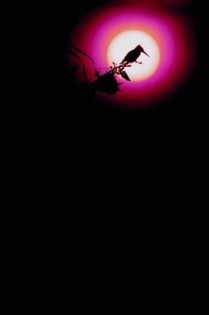ไนโรบี ภาพถ่าย