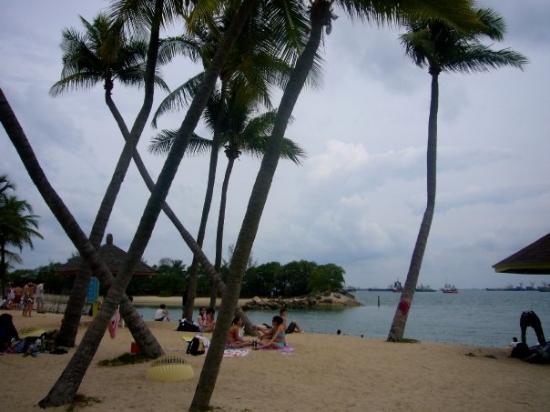 เกาะเซนโตซา, สิงคโปร์: ...d 樹...又左又右...想點ar...