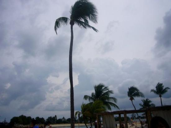 เกาะเซนโตซา, สิงคโปร์: ...樹ar樹...o_o..你好鬼高ar !!..