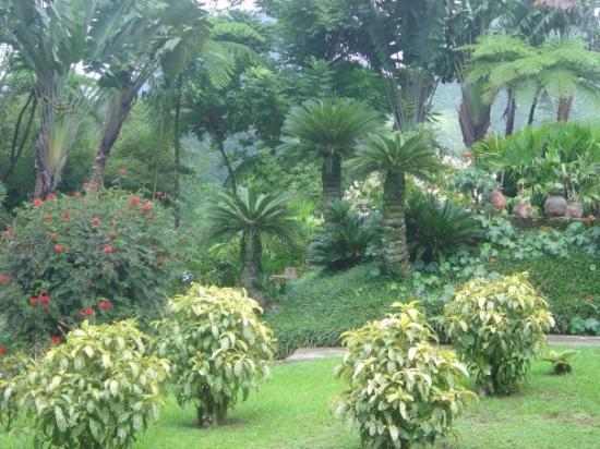 มาร์ตินีก: Jardin de Balata
