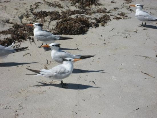ไมอามี่ีบีช, ฟลอริด้า: Miami Beach - Birds