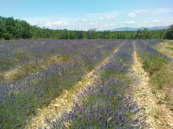 Aix-en-Provence, Francia: Sur la route du Mont Ventoux....