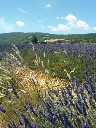 แอ็ซซองโปรวองซ์, ฝรั่งเศส: La Provence ....