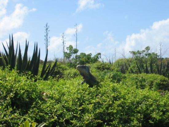 ปวงต์-อา-ปิตร์, กวาเดอลูป: la seule espèce humaine réisdente permanente sur Petite-Terre , le paradis sur terre !