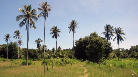 Angkor Destination Travel: Bamboo Island, Sihanoukville