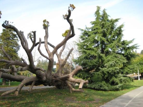 สวนแสตนเลย์: Tree of Life