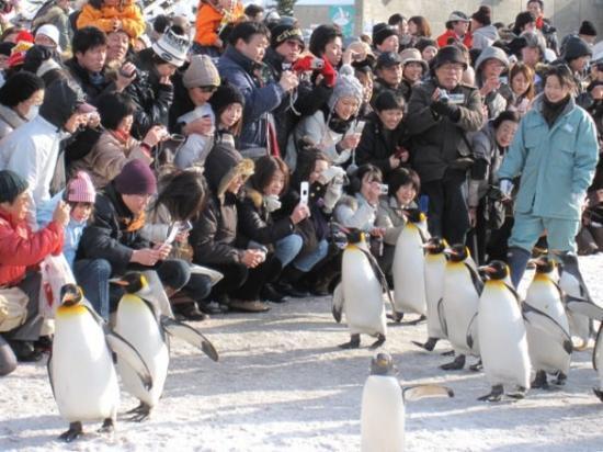 ซัปโปโร, ญี่ปุ่น: March of the Asahiyama Penguins