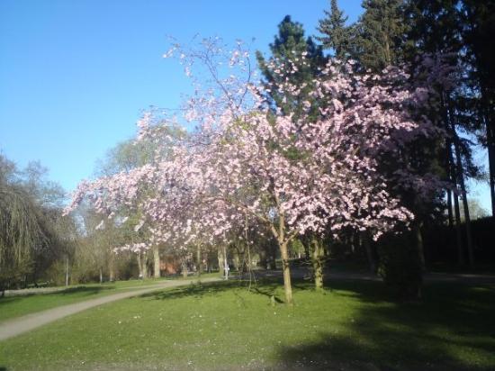นอร์เชอปิง, สวีเดน: Norrköping Folkparken 2009-04-30