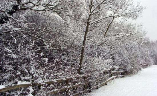 อ๊อกซฟอร์ด, UK: Redbridge