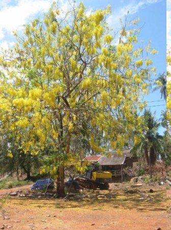 เมืองตราด, ไทย: yellow force