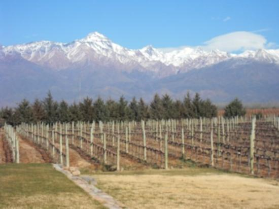 Andeluna Cellars: The  Andes and vineyards