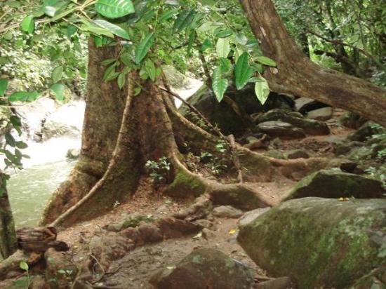 หัวหิน, ไทย: Sottobosco a Pa-La-U, Thailandia