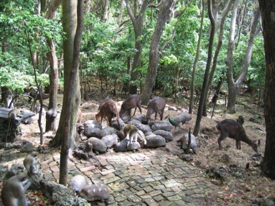 Barbados Wildlife Reserve: Munch time.