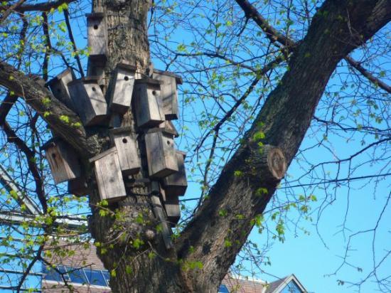 ออสโล, นอร์เวย์: Til og med fuglene bor trangt i byen :)