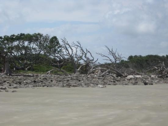 เกาะเจคิลล์, จอร์เจีย: Driftwood Beach