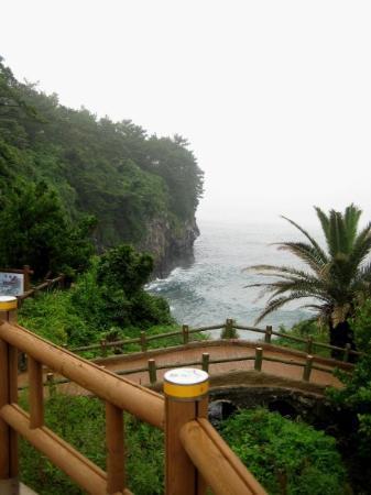 เกาะเชจู, เกาหลีใต้: Even the walk to the waterfalls was gorgeous!