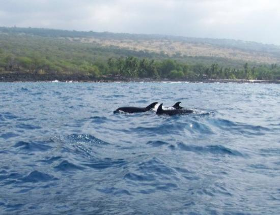 Lihue, ฮาวาย: Dolphins we saw on our Dolphin Discovery cruise