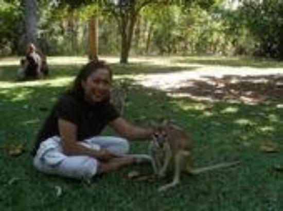 ดาร์วิน, ออสเตรเลีย: Wild life Park, Darwin Australia. April ~ May 2008