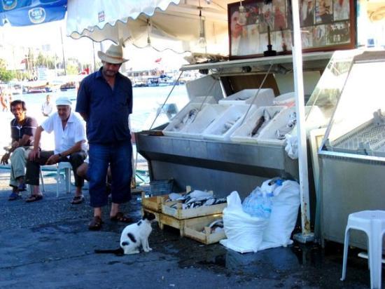 โบดรัม, ตุรกี: @BODRUM Kedi balığı istioooo:P