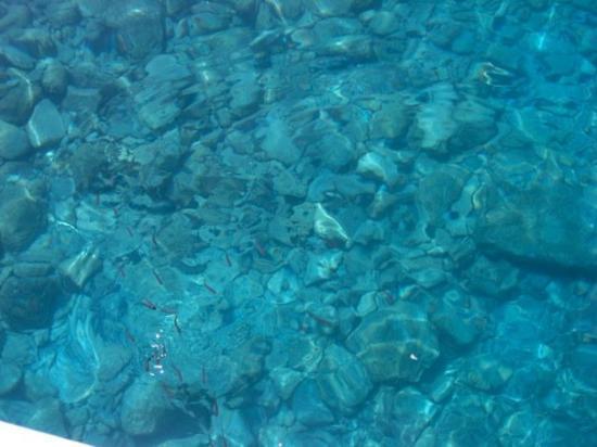 เฟทิเย, ตุรกี: @Fethiye su o kadar temiz ki balıkları da görebilirdik