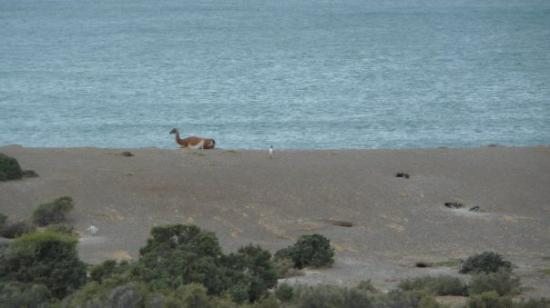 Puerto Madryn, อาร์เจนตินา: Convivencia