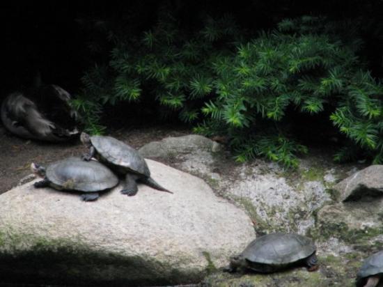 ลิเธียปาร์ค: Turtles!!  They are so cute.