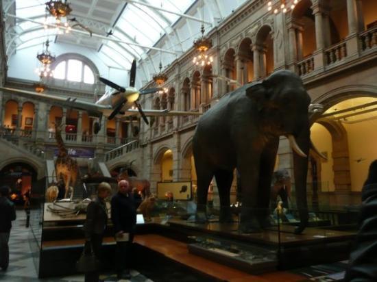 Kelvingrove Art Gallery and Museum: Kelvingrove Art Gallery à Glasgow. Un musée immense où on trouvait aussi bien une réserve d