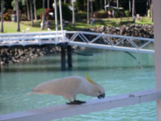 Hamilton Island ภาพถ่าย