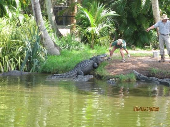 Naples Zoo at Caribbean Gardens: Feeding Bubba