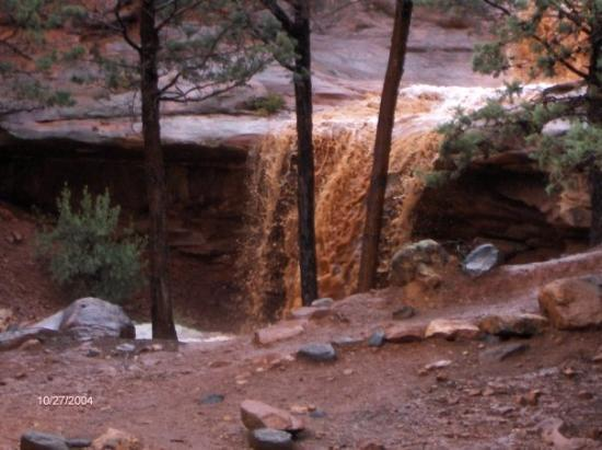 "Pink Jeep Tours Sedona: Rain run off in Sedona Park.  Water was red from ""dust""."