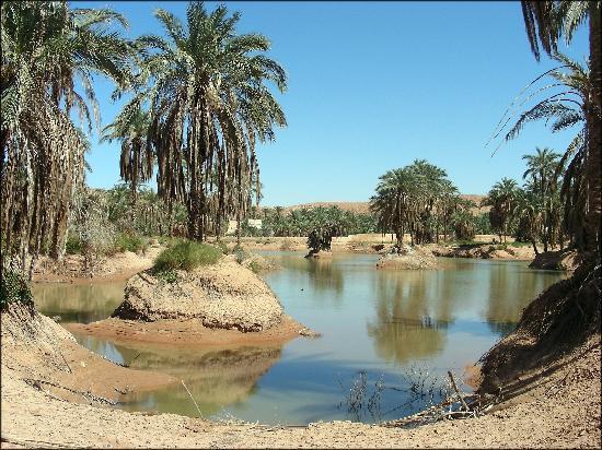 غرداية, الجزائر: palmeraie