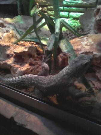 ซานอันโตนิโอ, เท็กซัส: A Horned Lizard