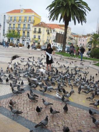เซตูบัล, โปรตุเกส: The creepy pigeons! :-S