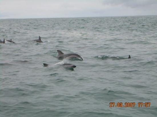 Dolphin Encounter: dolphins