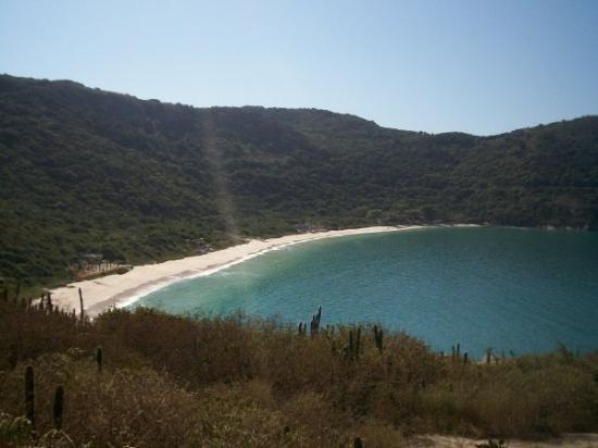 Arraial do Cabo - Etat de Rio de Janeiro. sur la plage abandonnéééee, coquillages et crustacés..