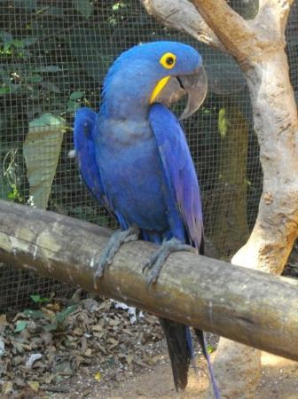 ฟอสโดอีกวาซู: Perroquet - Iguaçu