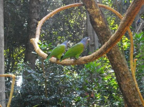 ฟอสโดอีกวาซู: Iguaçu- Perroquets tropicaux
