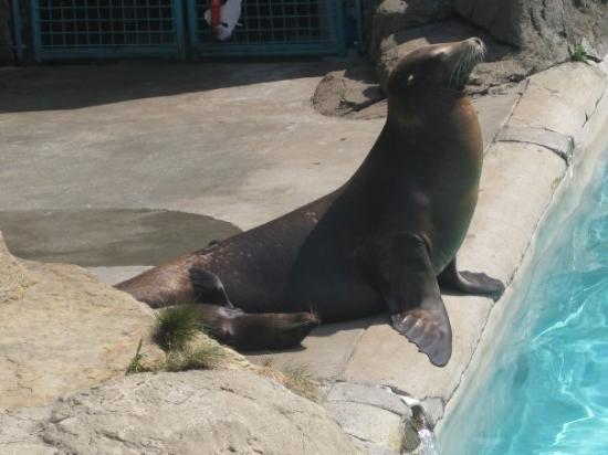 Pittsburgh Zoo & PPG Aquarium: Mama Sea Lion with her baby