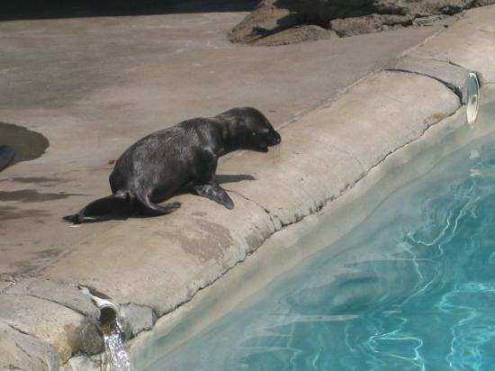 Pittsburgh Zoo & PPG Aquarium: Baby Sea Lion