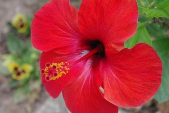 La Marina, สเปน: It's that tropical flower you get on all the patterns! It feels very fuzzy and nice.