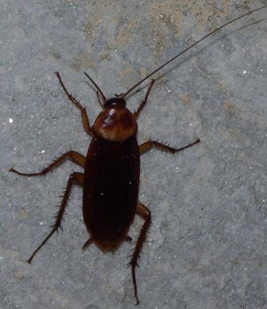 La Marina, สเปน: Eeew, a cockroach!