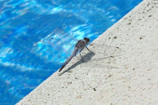 La Marina, สเปน: Oooh, a dragonfly!