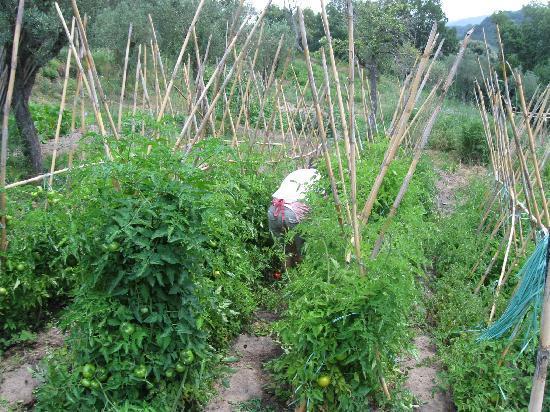 Fontana del Papa: fresh herbs from their organic farm