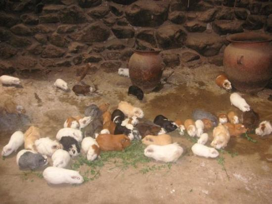 อูรูบัมบา, เปรู: this is the floor of someone's home! guiney pigs roaming around!