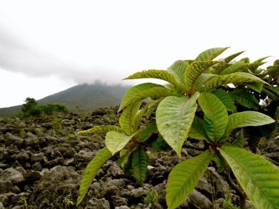 อุทยานแห่งชาติ Arenal Volcano National Park ภาพถ่าย