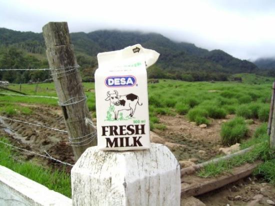 Kinabalu Park: Desa Farm... Yummy!!!