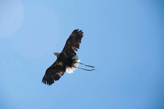 Nuevalos, สเปน: Águila