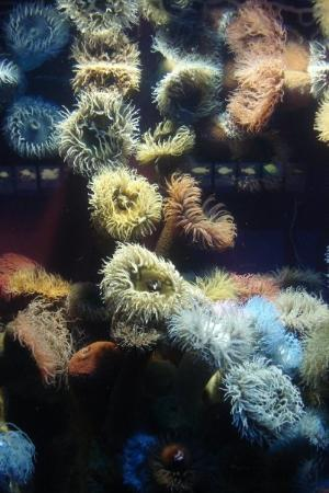 ใจกลางเมืองเคปทาวน์, แอฟริกาใต้: Nydelige sjøanemoner