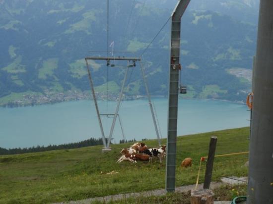 ทัน, สวิตเซอร์แลนด์: Bahntrasse des Skilifts.